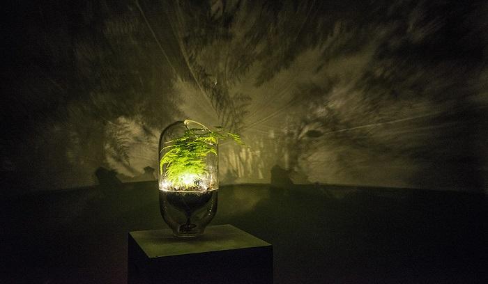 Rostlinná lampa, foto: Living Light