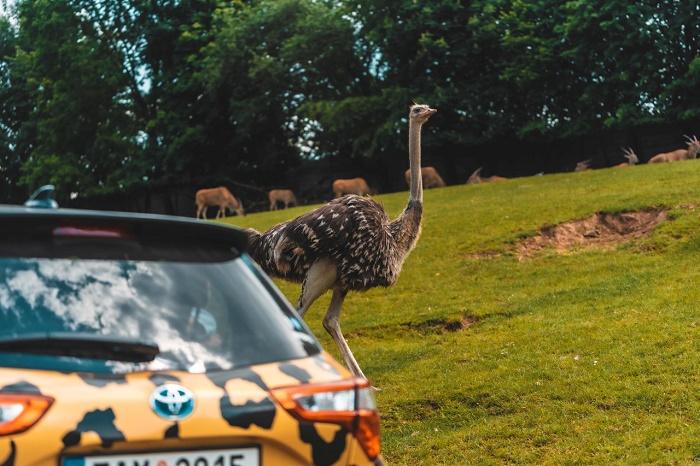 Toyota přidává ke svým sponzorským aktivitám i partnerství se Safari Parkem Dvůr Králové, zdroj: Toyota.